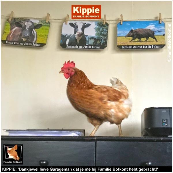 KIPPIE: 'Dankjewel lieve Garageman dat je me bij Familie Bofkont hebt gebracht!'