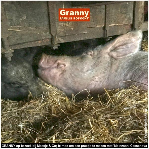 GRANNY op bezoek bij Moesje & Co; te moe om een praatje te maken met 'kleinzoon' Cassanova