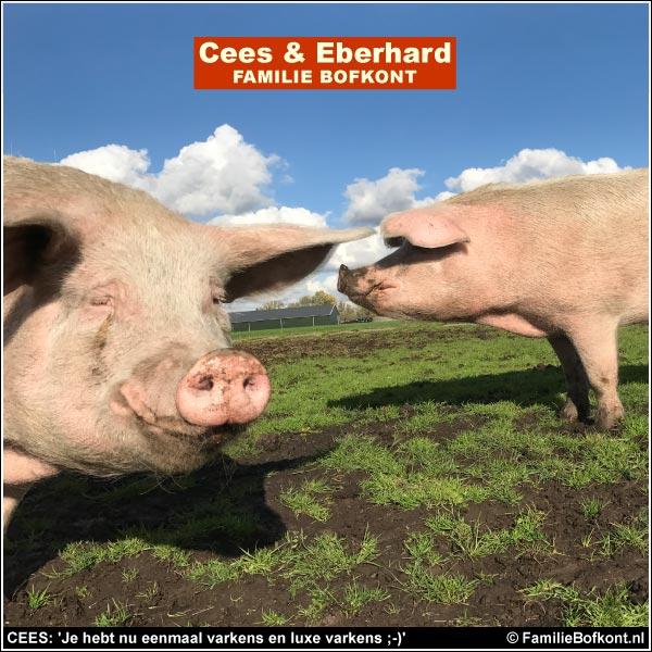 CEES: 'Je hebt nu eenmaal varkens en luxe varkens ;-)'