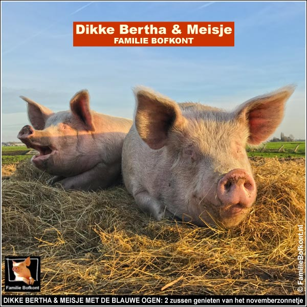 DIKKE BERTHA & MEISJE MET DE BLAUWE OGEN: 2 zussen genieten van het novemberzonnetje