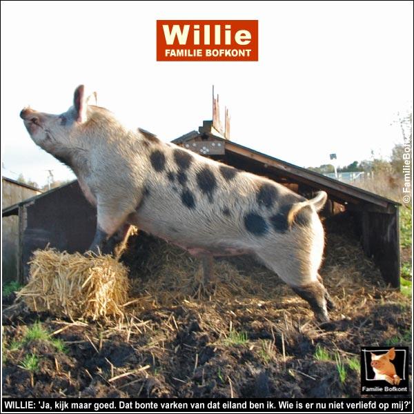 WILLIE: 'Ja, kijk maar goed. Dat bonte varken van dat eiland ben ik. Wie is er nu niet verliefd op mij?'