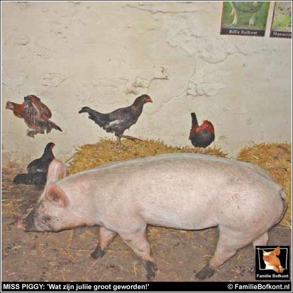 MISS PIGGY: 'Wat zijn juliie groot geworden!'
