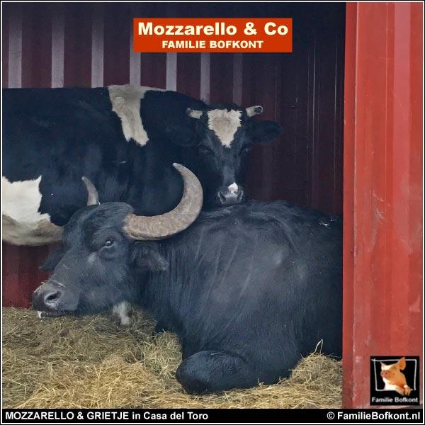 MOZZARELLO & GRIETJE in Casa del Toro