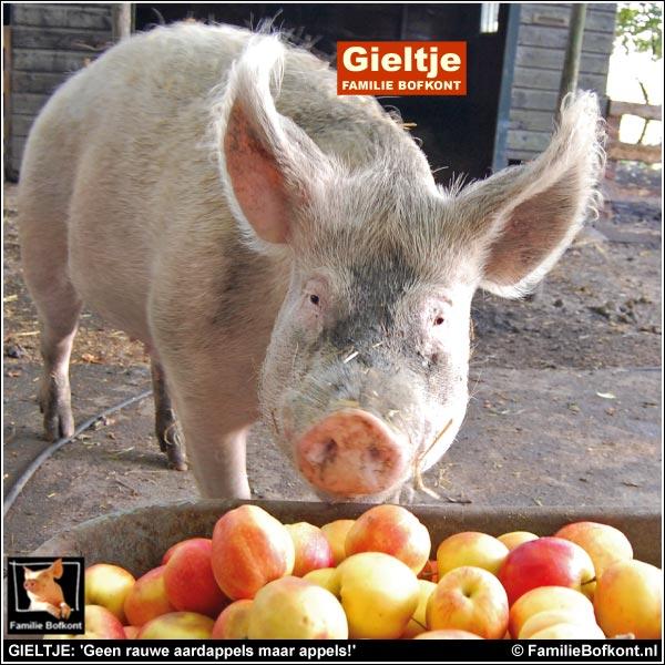 GIELTJE: 'Geen rauwe aardappels maar appels!'