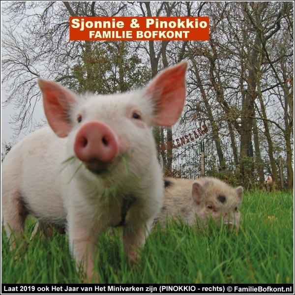 Laat 2019 ook Het Jaar van Het Minivarken zijn (PINOKKIO - rechts)