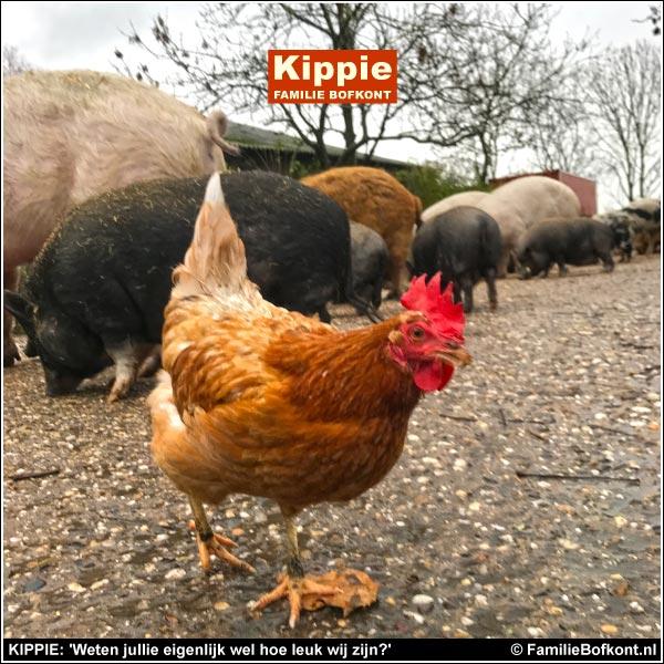 KIPPIE: 'Weten jullie eigenlijk wel hoe leuk wij zijn?'