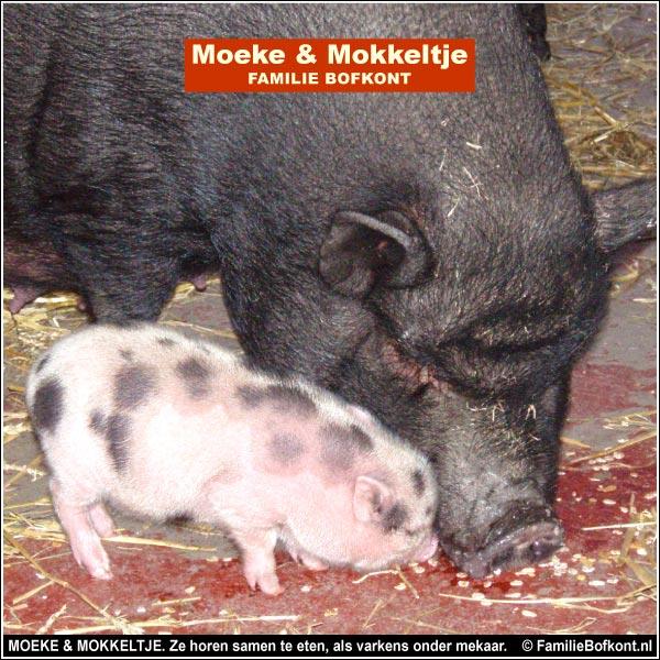 MOEKE & MOKKELTJE. Ze horen samen te eten, als varkens onder mekaar.