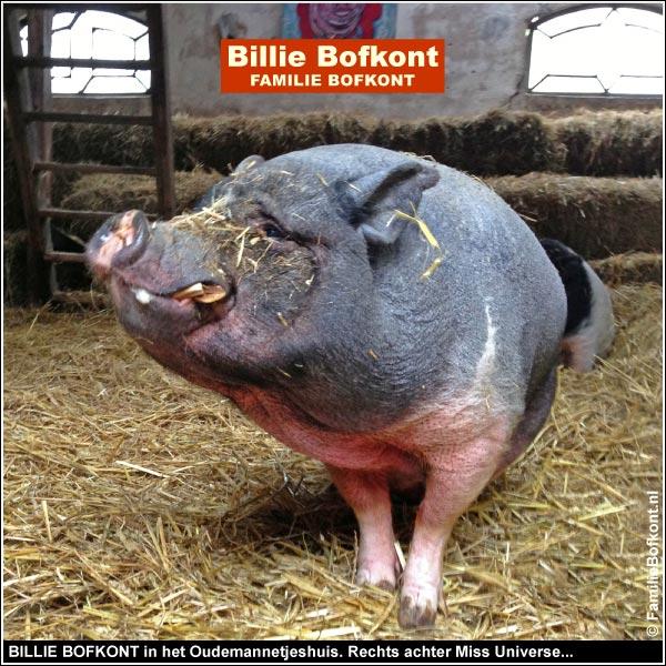 BILLIE BOFKONT in het Oudemannetjeshuis. Rechts achter Miss Universe...